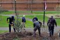 Planting of tree